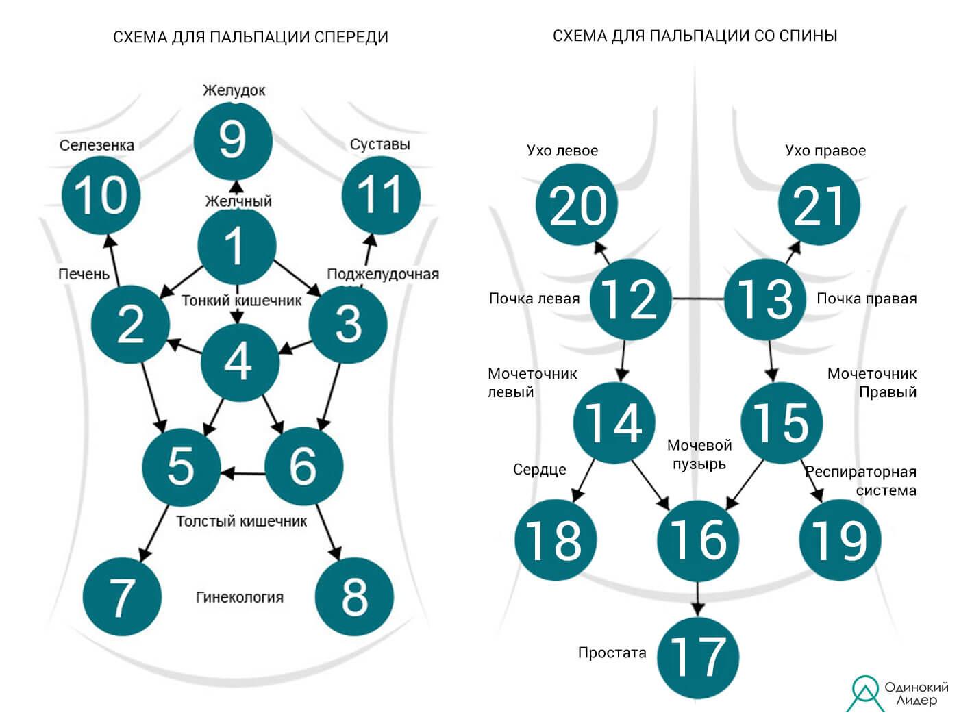 Схема для пальпации