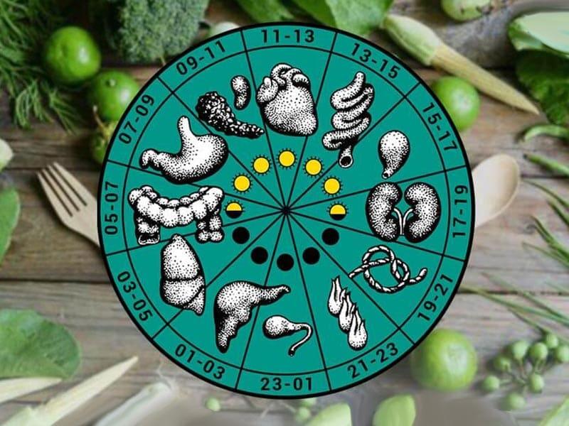 Пищевые суточные циклы и периоды