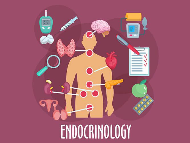 Эндокринная система, общие сведения