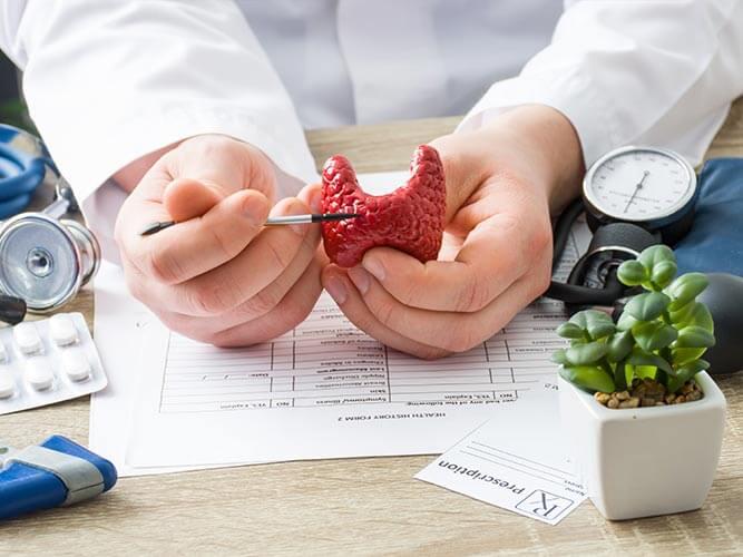 Щитовидная железа и ее роль
